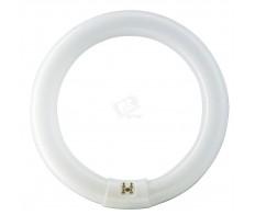 Лампа ЛЛ 22Вт TLE22/54/765 кольцевая холодная